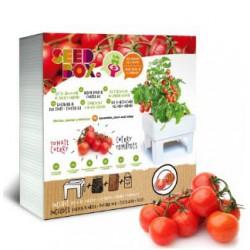 Huerto urbano - tomate cherry
