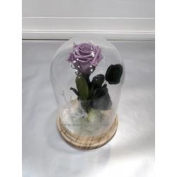 Cupula Rosa Eterna
