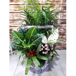 Pozo De Plantas