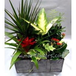 Baul Plantas