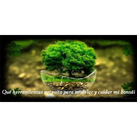 Qué herramientas necesito para modelar y cuidar mi bonsái