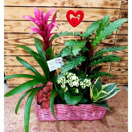 Plantas Amazonia