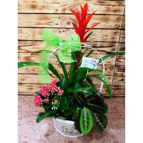 Plantas Selva