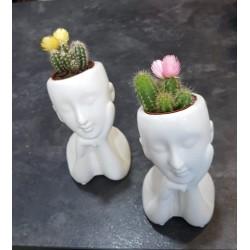 Peque Cactus