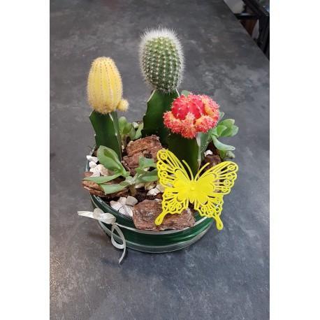 Injertos Cactus