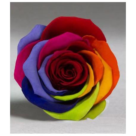 Rosa eterna Arcoiris