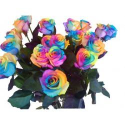 Rosas Arcoiris