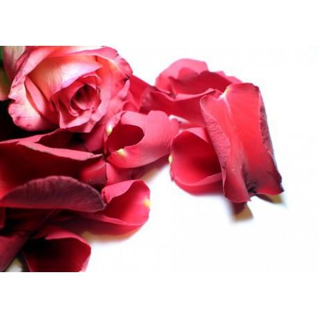Pétalos de rosa